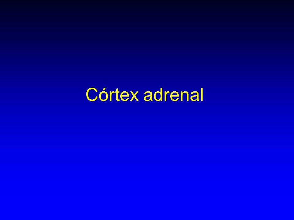 Córtex adrenal