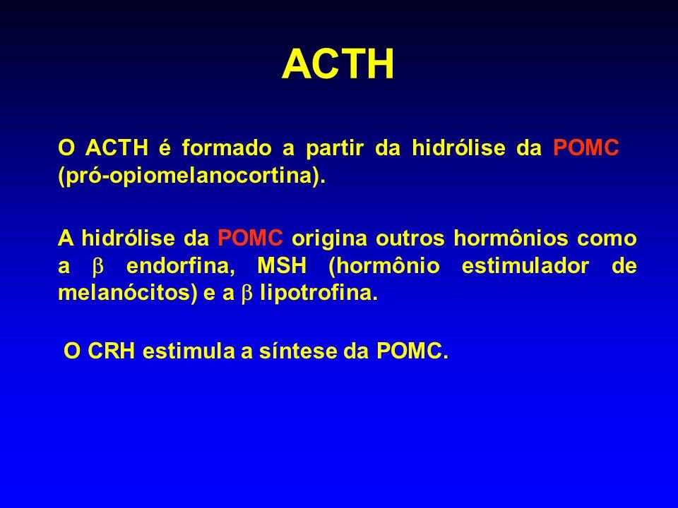 ACTH O ACTH é formado a partir da hidrólise da POMC (pró-opiomelanocortina). A hidrólise da POMC origina outros hormônios como a endorfina, MSH (hormô