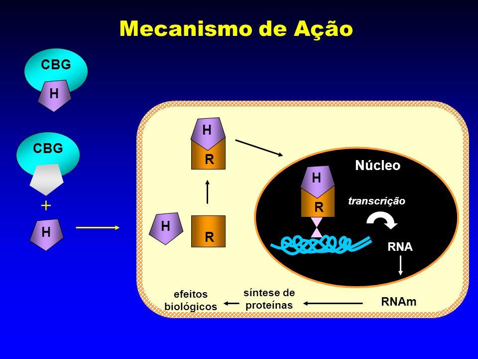 R H Mecanismo de Ação Núcleo CBG H R R H transcrição CBG H H RNA RNAm síntese de proteínas efeitos biológicos