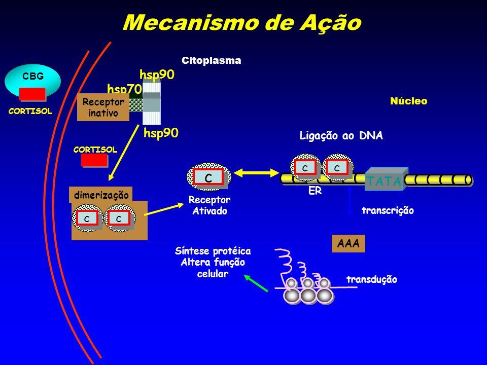 hsp90 hsp70 hsp90 CORTISOL c c Receptor Ativado Receptor inativo Ligação ao DNA c c c c TATA ER dimerização c c c c transcrição transdução Síntese pro