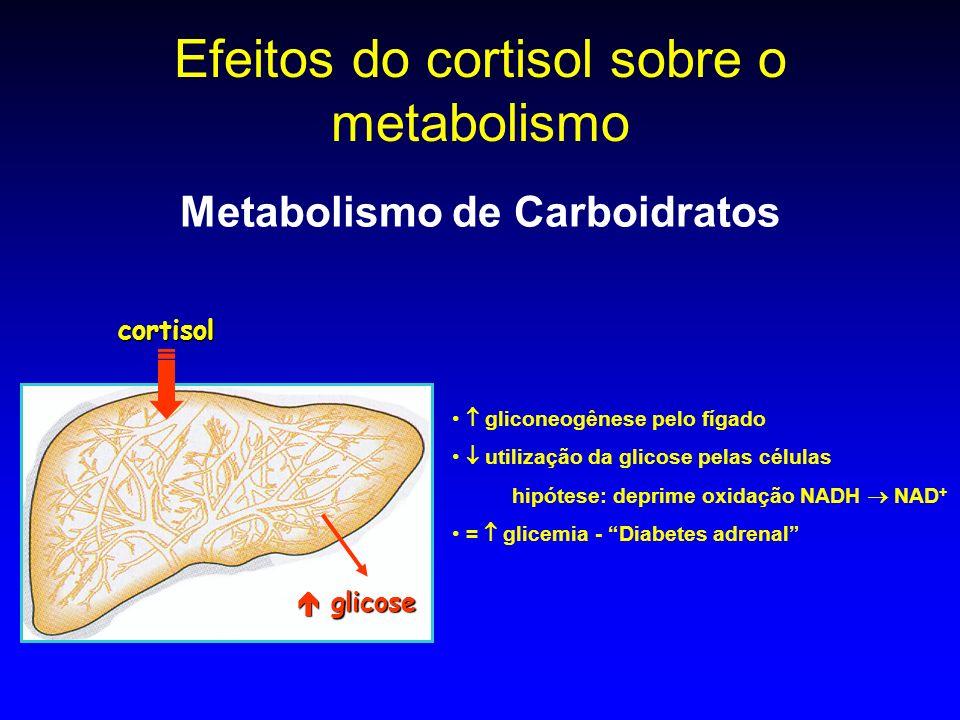 Efeitos do cortisol sobre o metabolismo Metabolismo de Carboidratos gliconeogênese pelo fígado utilização da glicose pelas células hipótese: deprime o