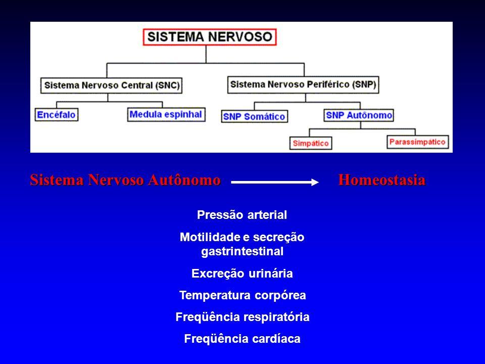 Sistema Nervoso Autônomo Homeostasia Pressão arterial Motilidade e secreção gastrintestinal Excreção urinária Temperatura corpórea Freqüência respirat