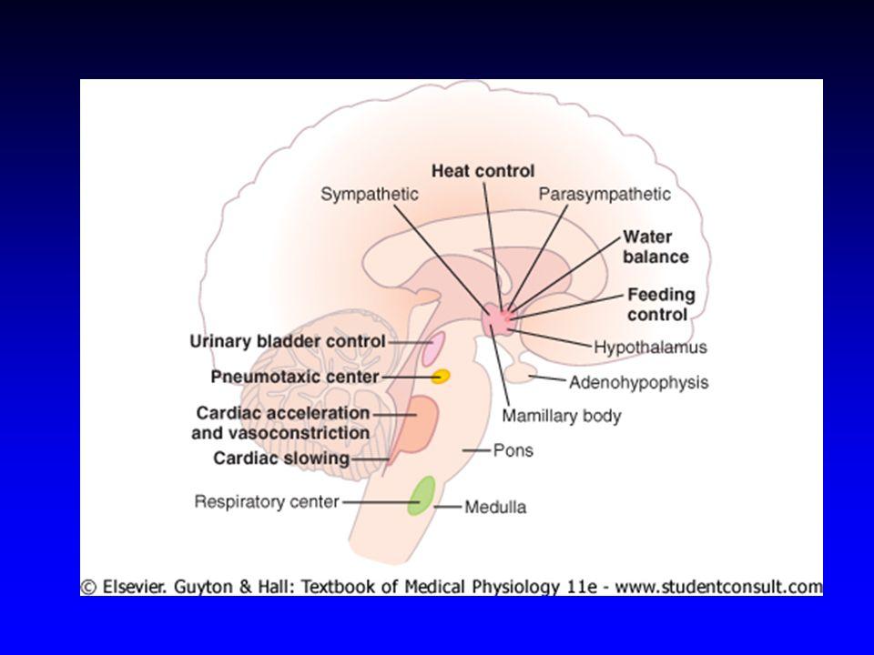 Calor e frio intenso Traumatismos Fatores estimulantes de CRH A liberação de ACTH e cortisol apresenta variação circadiana Infecções Estresse Cortisol (ng/mL) 8 11 14 17 20 23 2 5 15 12 9 6 3 Horário do dia
