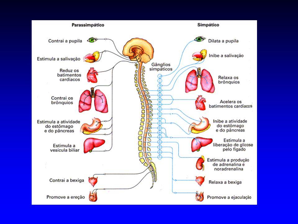 Resposta Alarme do SN Simpático Mass Discharge Aumenta consideravelmente a capacidade do organismo de reagir a uma situação de perigo ou a um agente estressor Pressão Arterial Fluxo Sangüíneo (músculos esqueléticos) Taxa de Metabolismo Celular Concentração de Glicose Glicólise (fígado e músculo) Força Muscular Atividade Mental Taxa de Coagulação Sanguínea