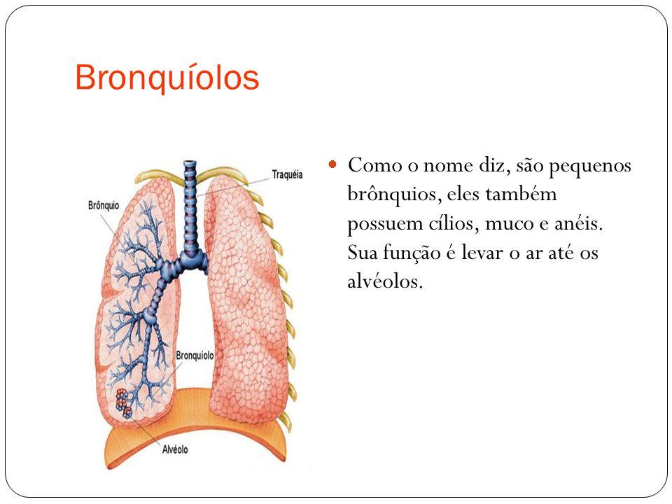 Bronquíolos Como o nome diz, são pequenos brônquios, eles também possuem cílios, muco e anéis. Sua função é levar o ar até os alvéolos.