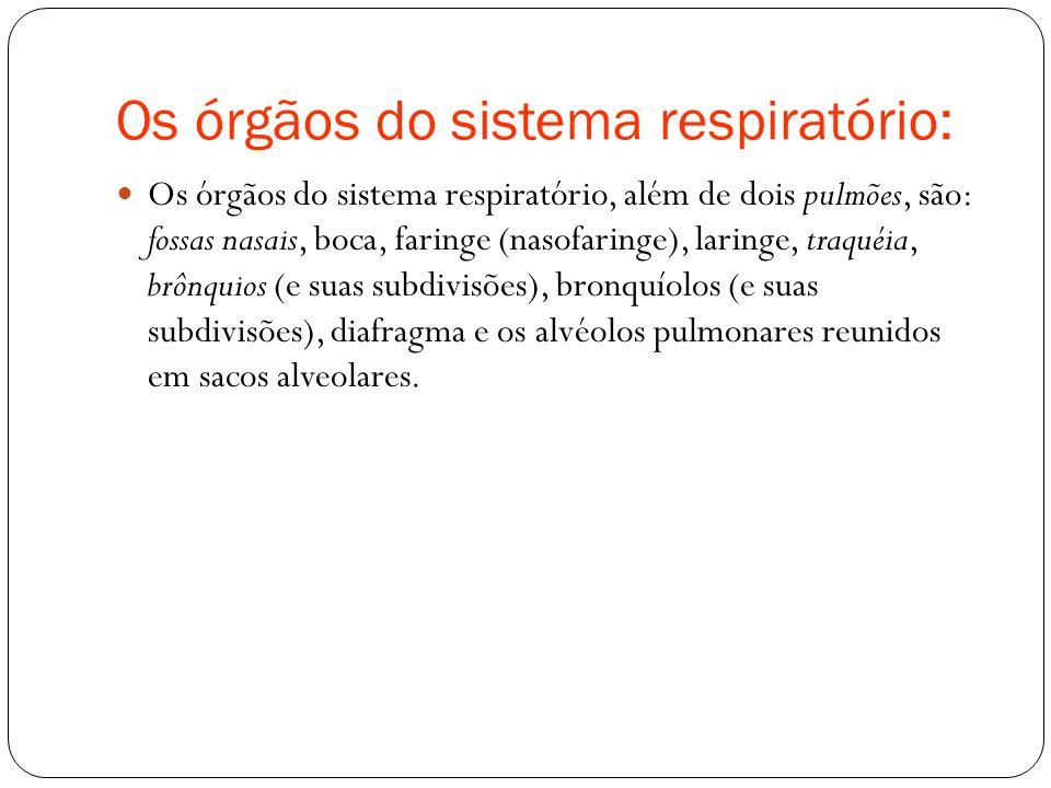 Os órgãos do sistema respiratório: Os órgãos do sistema respiratório, além de dois pulmões, são: fossas nasais, boca, faringe (nasofaringe), laringe,