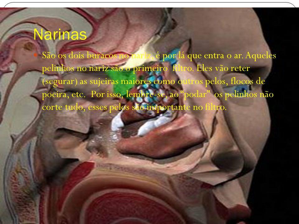 Narinas São os dois buracos no nariz, é por lá que entra o ar. Aqueles pelinhos no nariz são o primeiro filtro. Eles vão reter (segurar) as sujeiras m