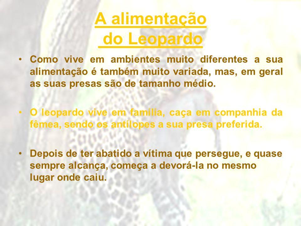 A alimentação do Leopardo Como vive em ambientes muito diferentes a sua alimentação é também muito variada, mas, em geral as suas presas são de tamanh