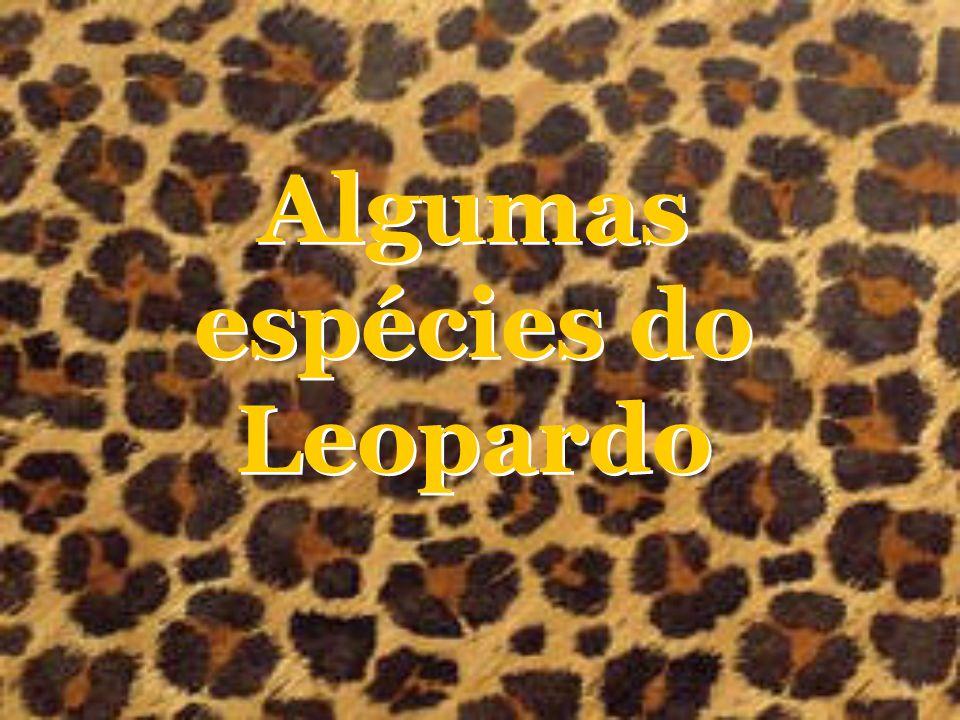 Algumas espécies do Leopardo