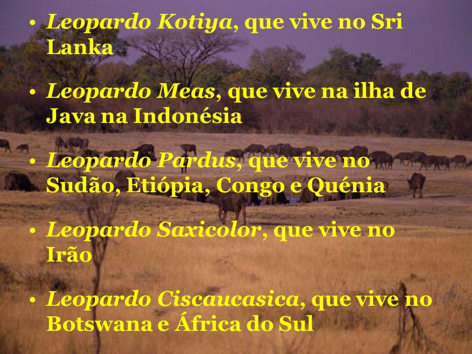 Leopardo Kotiya, que vive no Sri Lanka Leopardo Meas, que vive na ilha de Java na Indonésia Leopardo Pardus, que vive no Sudão, Etiópia, Congo e Quéni