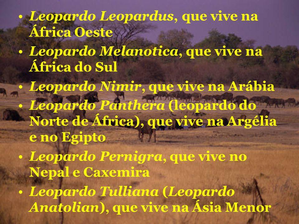 Leopardo Leopardus, que vive na África Oeste Leopardo Melanotica, que vive na África do Sul Leopardo Nimir, que vive na Arábia Leopardo Panthera (leop