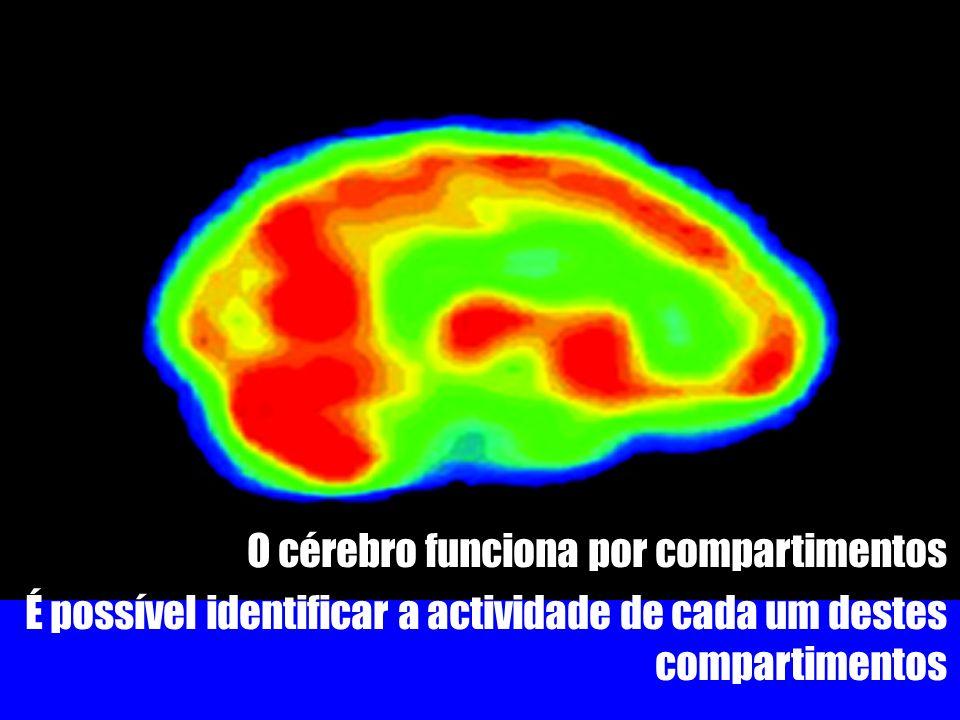 O cérebro funciona por compartimentos É possível identificar a actividade de cada um destes compartimentos