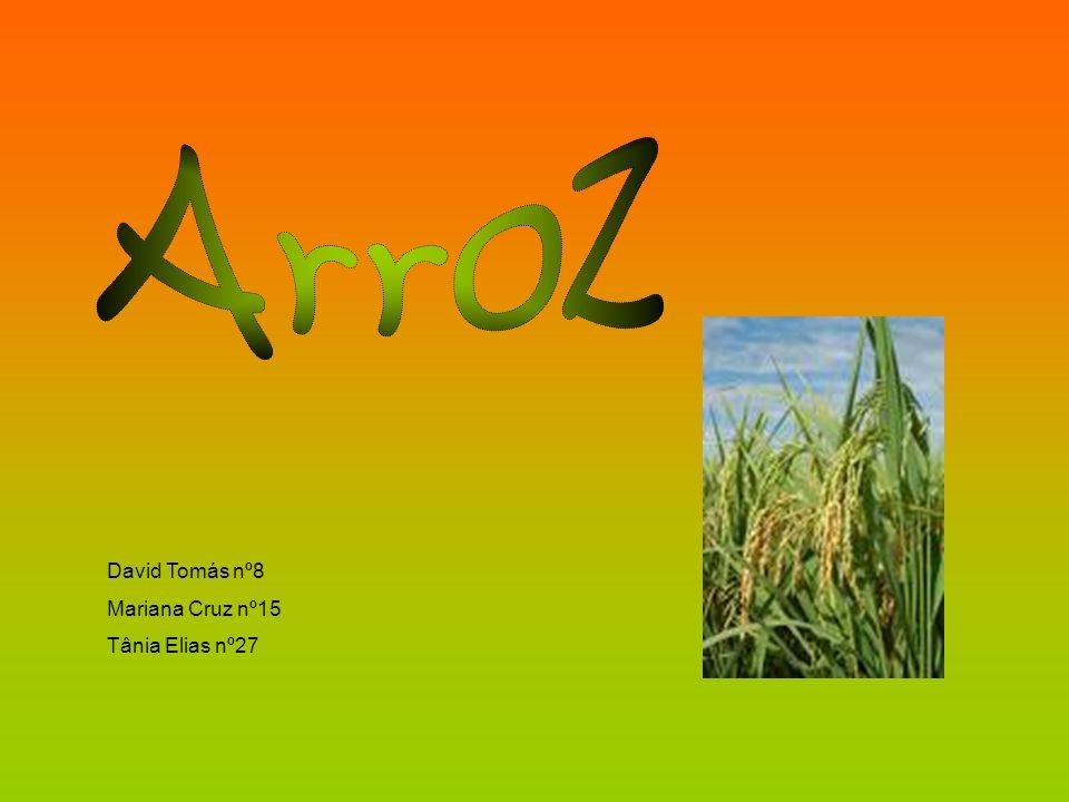 Este cereal agrupa-se em duas classes, de acordo com as dimensões dos bagos; arroz de grão curto e de grão longo.