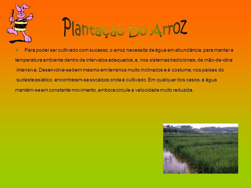 Para poder ser cultivado com sucesso, o arroz necessita de água em abundância, para manter a temperatura ambiente dentro de intervalos adequados, e, n