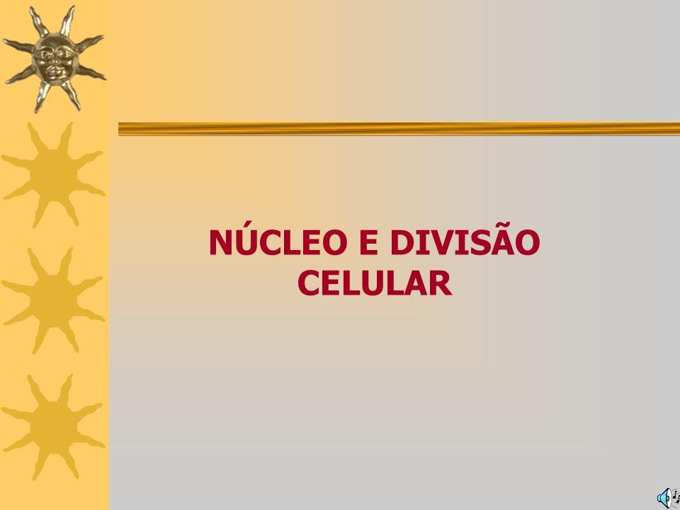 DIVISÃO CELULAR Tipos de divisão celular Meiose II PRÓFASE II Desaparecimento da carioteca e do nucléolo; Duplicação e migração dos centríolos