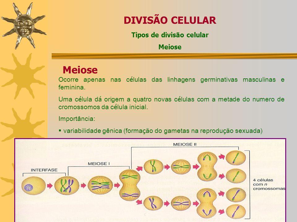 DIVISÃO CELULAR Tipos de divisão celular Meiose Ocorre apenas nas c é lulas das linhagens germinativas masculinas e feminina.