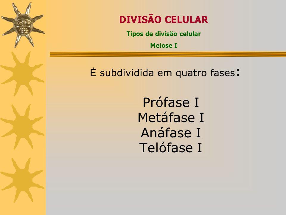 É subdividida em quatro fases : Prófase I Metáfase I Anáfase I Telófase I DIVISÃO CELULAR Tipos de divisão celular Meiose I