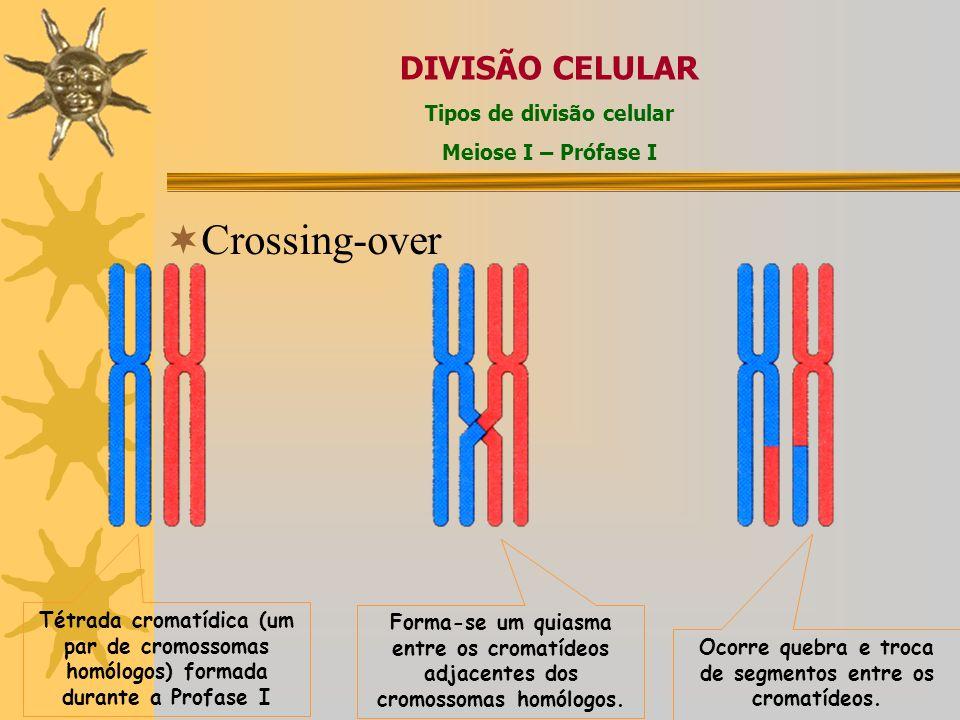 Crossing-over Tétrada cromatídica (um par de cromossomas homólogos) formada durante a Profase I Forma-se um quiasma entre os cromatídeos adjacentes dos cromossomas homólogos.