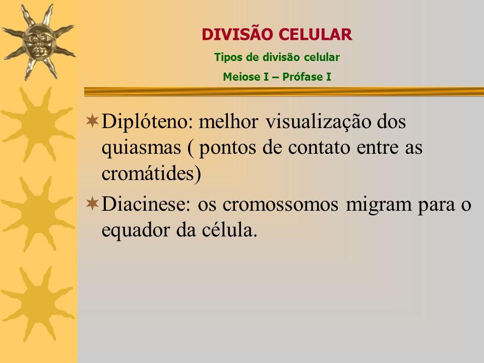 Diplóteno: melhor visualização dos quiasmas ( pontos de contato entre as cromátides) Diacinese: os cromossomos migram para o equador da célula.