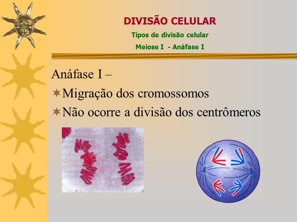 Anáfase I – Migração dos cromossomos Não ocorre a divisão dos centrômeros DIVISÃO CELULAR Tipos de divisão celular Meiose I - Anáfase I