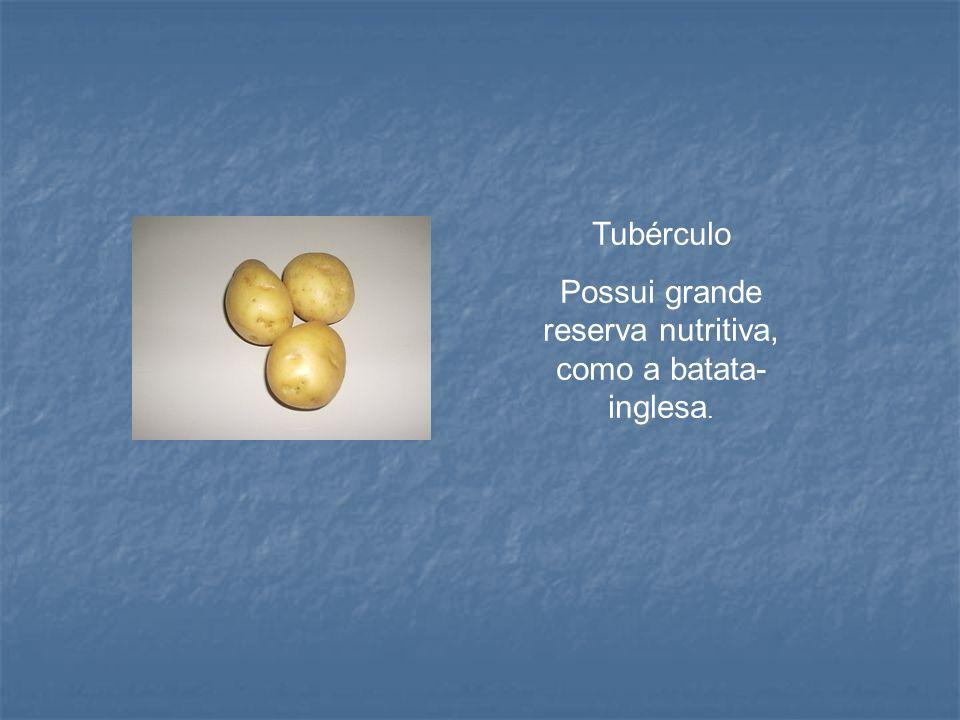 Tubérculo Possui grande reserva nutritiva, como a batata- inglesa.