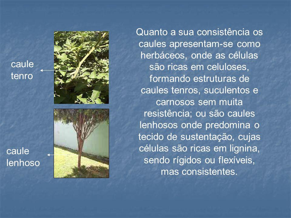 Referência AGAREZ, Fernando Vieira.Botânica Angiospermae.