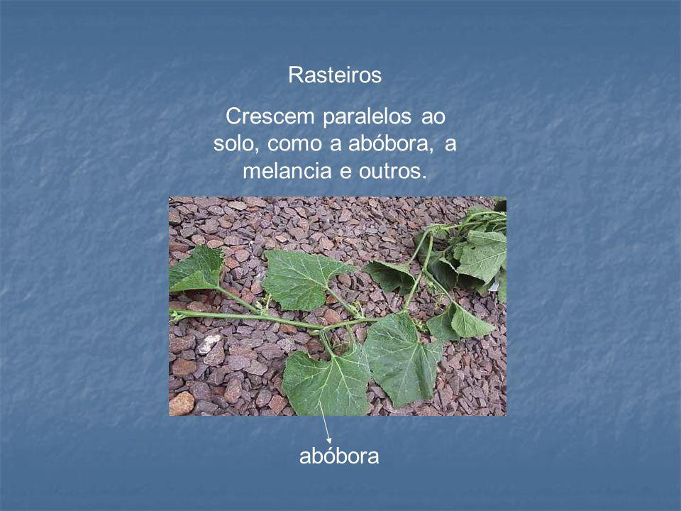 Aéreos trepadores Podem apresentar uma adaptação de fixação chamadas de gavinhas, como no maracujá e na uva, ou apenas se enrolam no substrato, emaranhando-se a ele como os cipós.