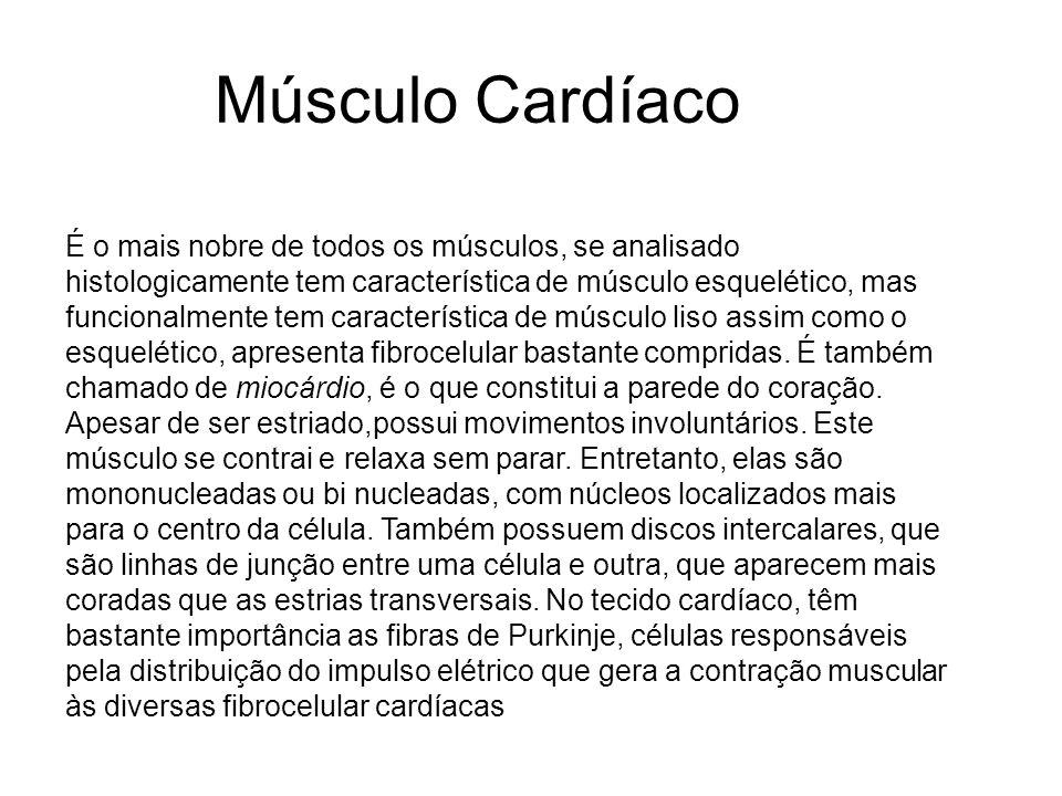 Músculo Cardíaco É o mais nobre de todos os músculos, se analisado histologicamente tem característica de músculo esquelético, mas funcionalmente tem