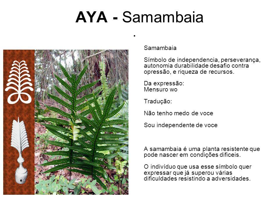 AYA - Samambaia Samambaia Símbolo de independencia, perseverança, autonomia durabilidade desafio contra opressão, e riqueza de recursos.
