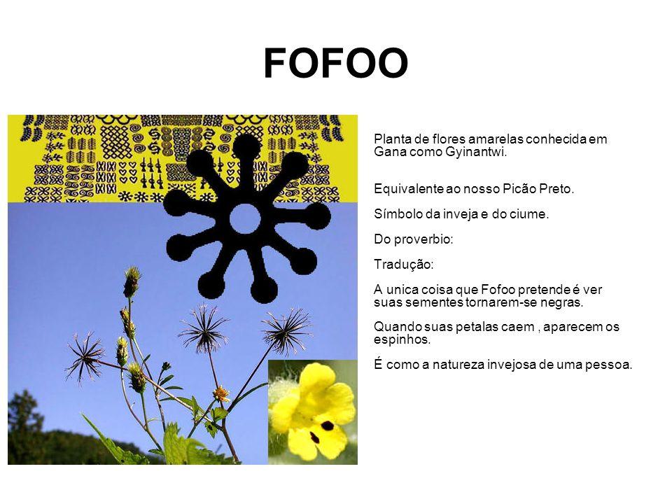 FOFOO Planta de flores amarelas conhecida em Gana como Gyinantwi.