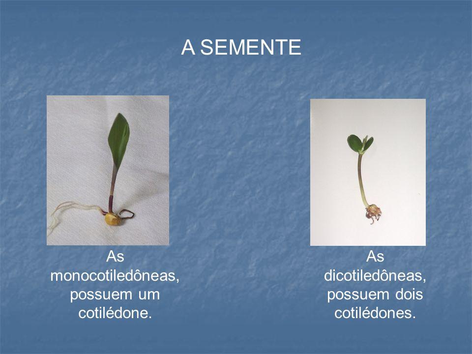 NOMENCLATURA Existe uma nova nomenclatura para especificar as mono e dicotiledôneas.