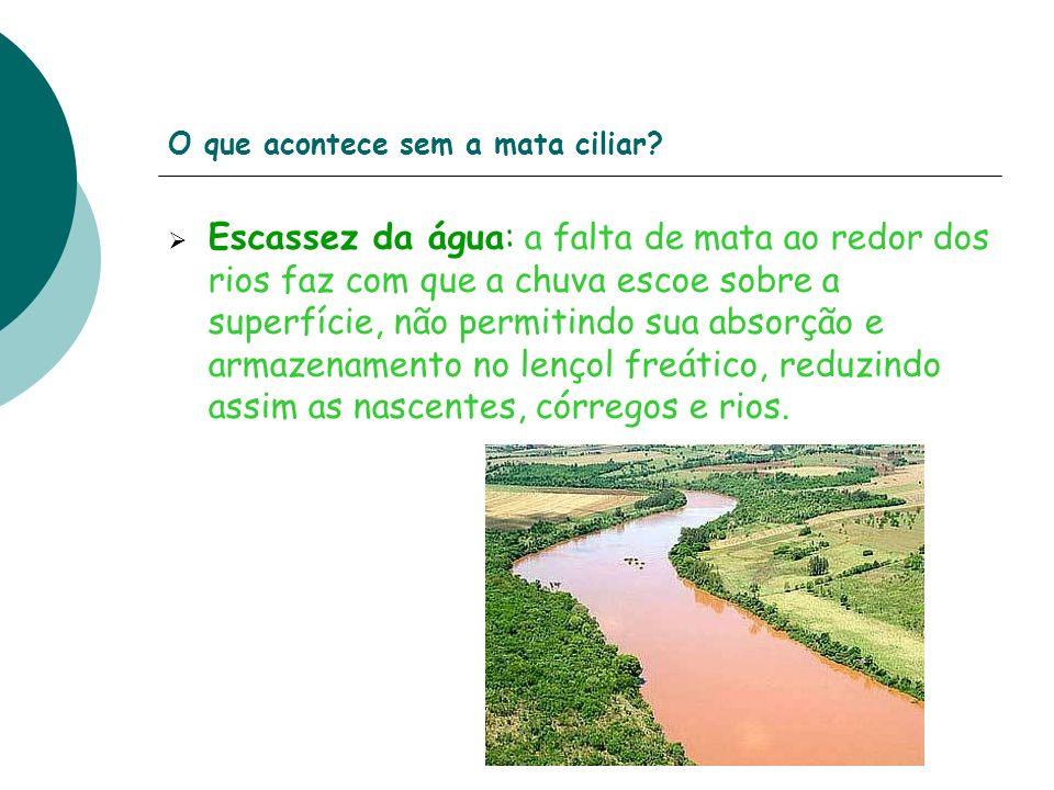 O que acontece sem a mata ciliar? Escassez da água: a falta de mata ao redor dos rios faz com que a chuva escoe sobre a superfície, não permitindo sua