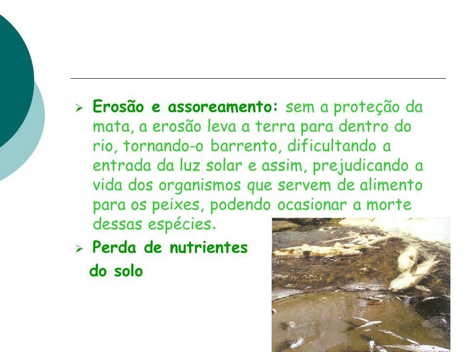 Erosão e assoreamento: sem a proteção da mata, a erosão leva a terra para dentro do rio, tornando-o barrento, dificultando a entrada da luz solar e as