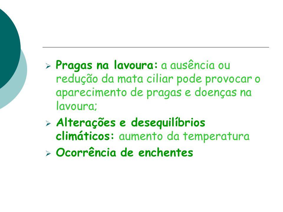 Pragas na lavoura: a ausência ou redução da mata ciliar pode provocar o aparecimento de pragas e doenças na lavoura; Alterações e desequilíbrios climá