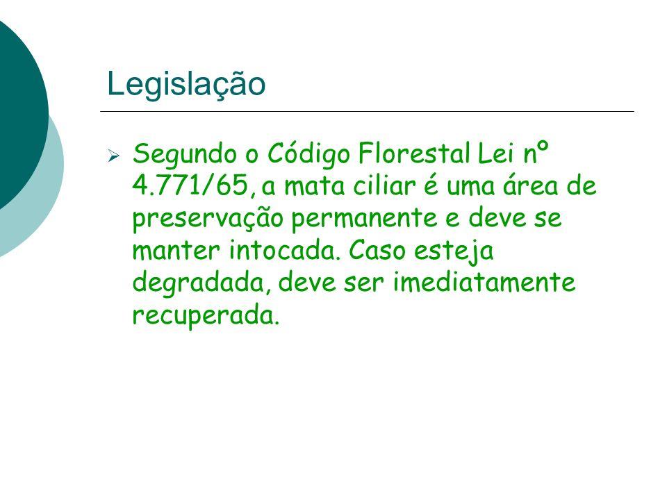 Legislação Segundo o Código Florestal Lei nº 4.771/65, a mata ciliar é uma área de preservação permanente e deve se manter intocada. Caso esteja degra