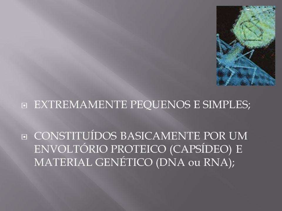 EXTREMAMENTE PEQUENOS E SIMPLES; CONSTITUÍDOS BASICAMENTE POR UM ENVOLTÓRIO PROTEICO (CAPSÍDEO) E MATERIAL GENÉTICO (DNA ou RNA);