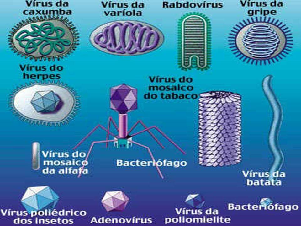 Vírus e Doenças Associadas 9) Principais VirosesDengue