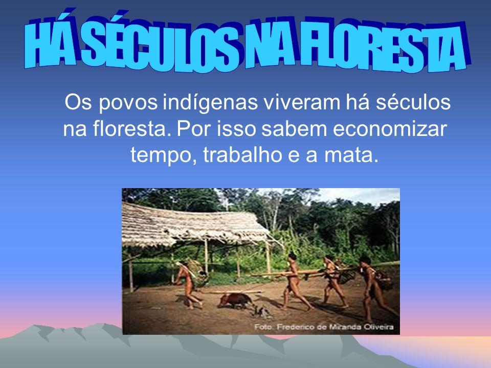 Os povos indígenas viveram há séculos na floresta.