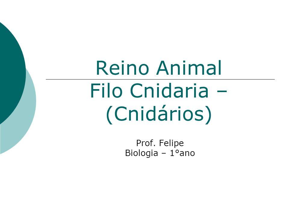 Reino Animal Filo Cnidaria – (Cnidários) Prof. Felipe Biologia – 1°ano