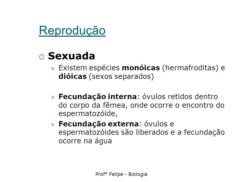 Prof° Felipe - Biologia Reprodução Sexuada Existem espécies monóicas (hermafroditas) e dióicas (sexos separados) Fecundação interna: óvulos retidos de