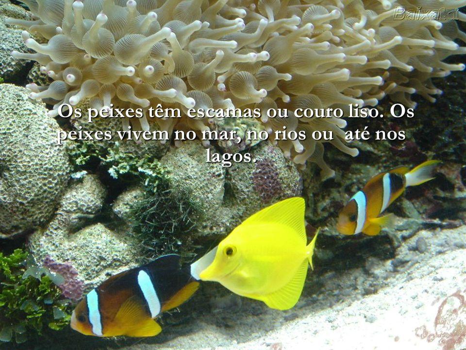Os peixes podem respirar pelas brânquias.