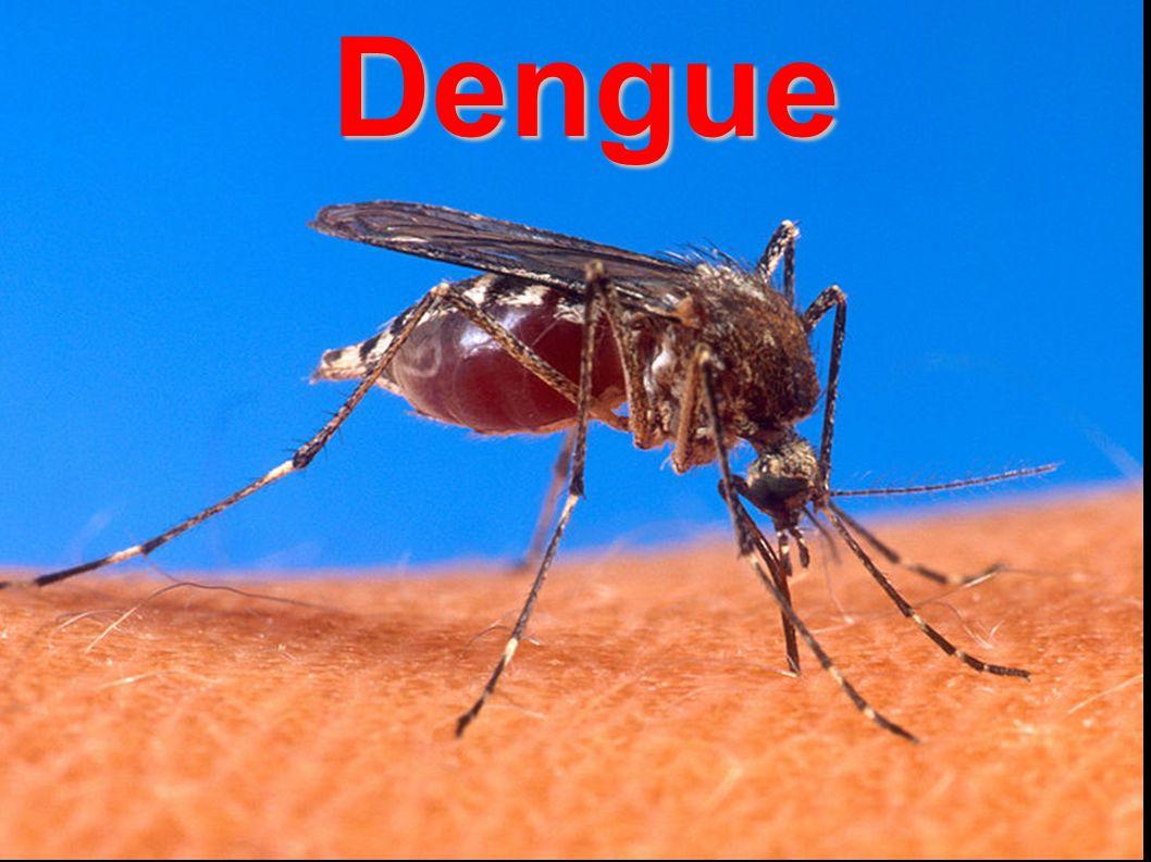 DengueDengue