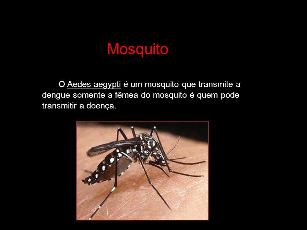 Larvas do mosquito: