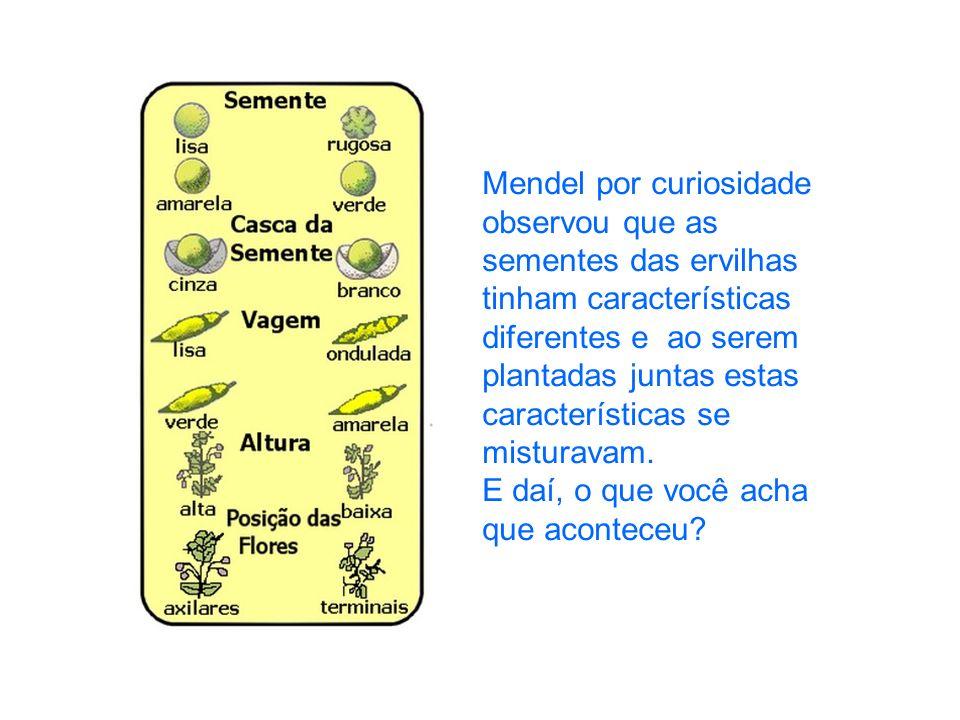 Mendel por curiosidade observou que as sementes das ervilhas tinham características diferentes e ao serem plantadas juntas estas características se mi