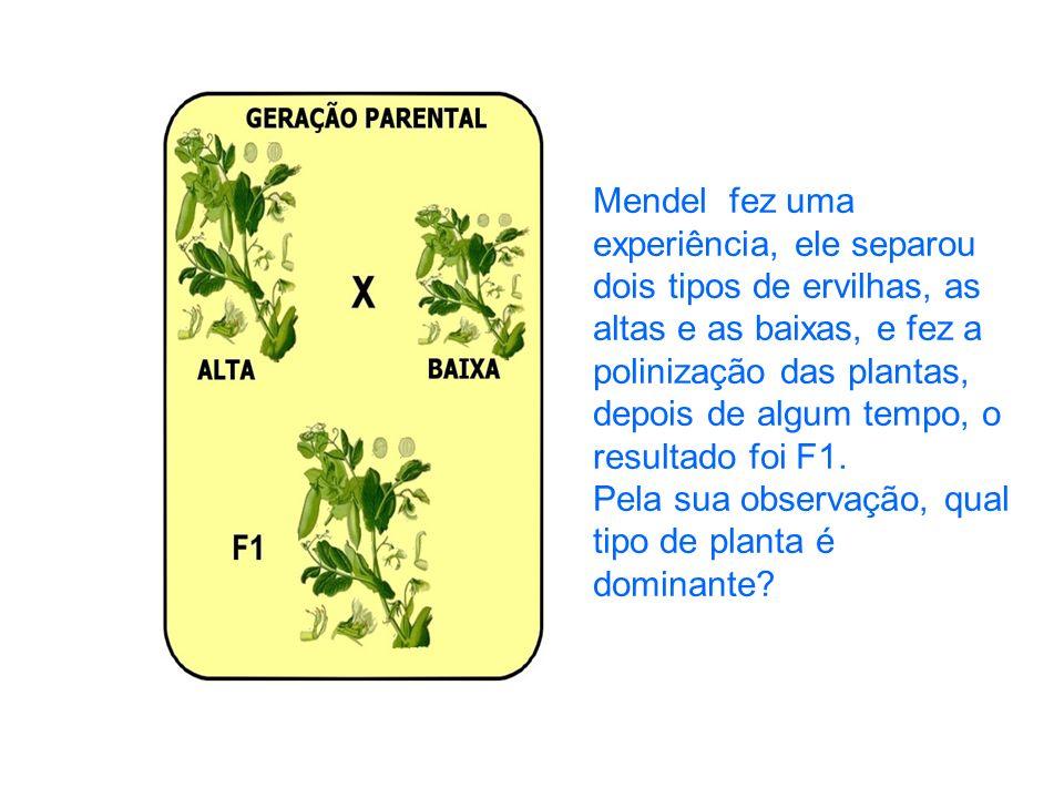 Mendel fez uma experiência, ele separou dois tipos de ervilhas, as altas e as baixas, e fez a polinização das plantas, depois de algum tempo, o result