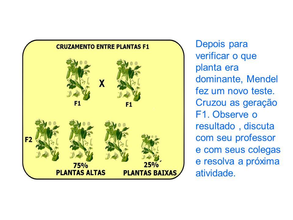 Depois para verificar o que planta era dominante, Mendel fez um novo teste. Cruzou as geração F1. Observe o resultado, discuta com seu professor e com