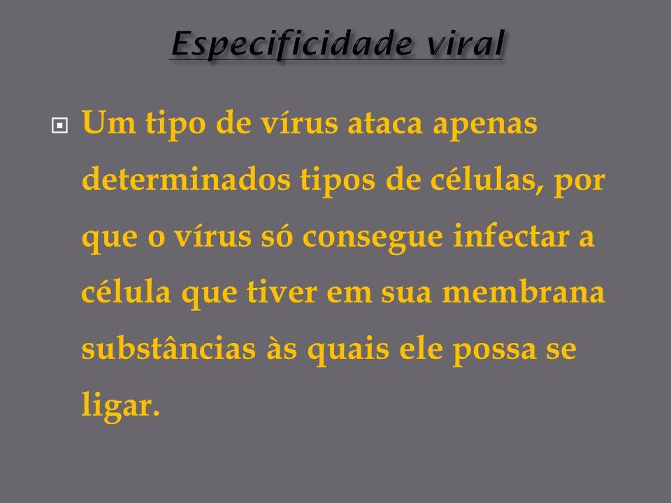 Um tipo de vírus ataca apenas determinados tipos de células, por que o vírus só consegue infectar a célula que tiver em sua membrana substâncias às quais ele possa se ligar.