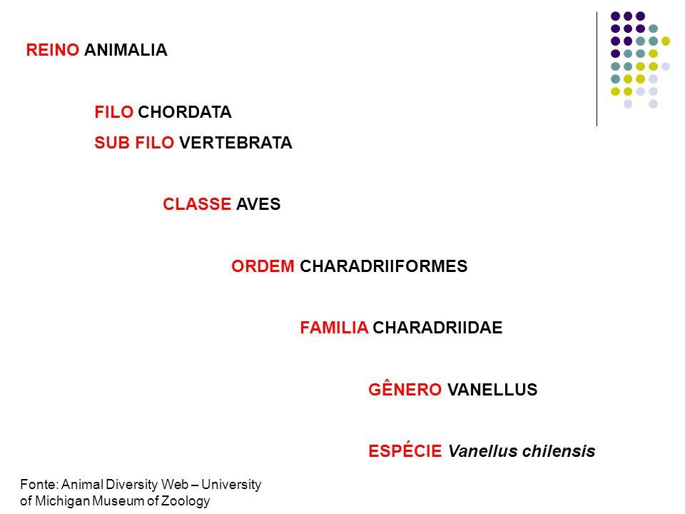 Vanellus chilensis V. coronatus V. malabaricus