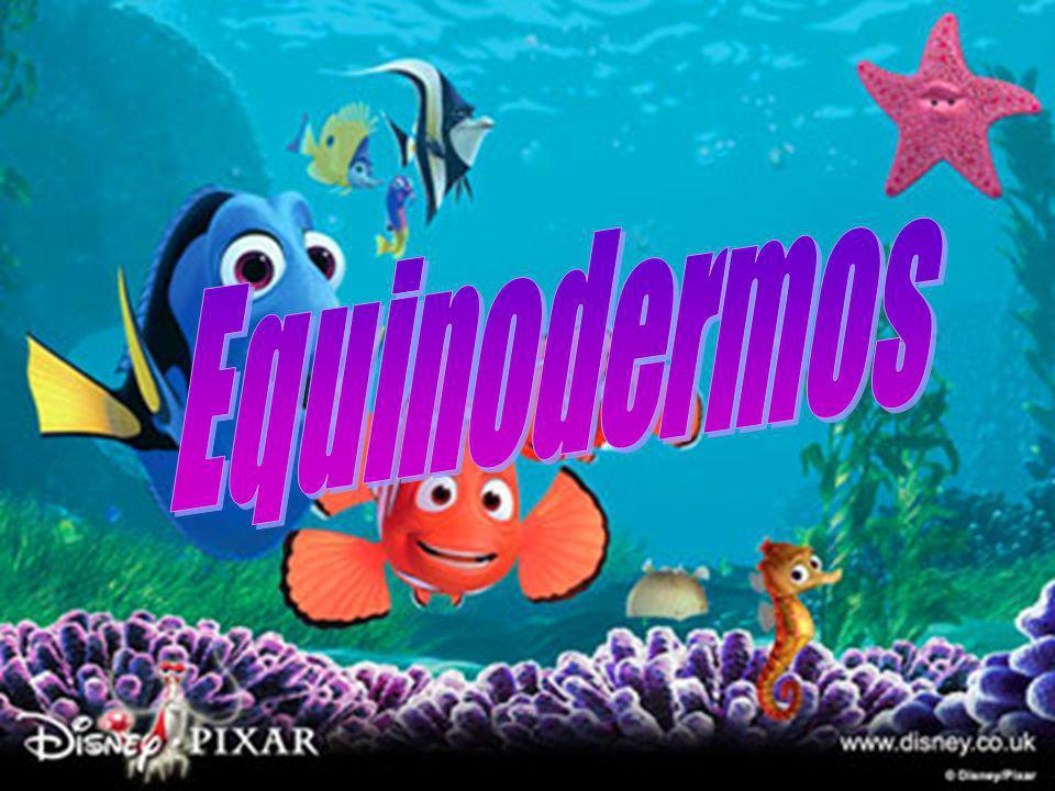 Os equinodermos são animais, que não têm a coluna vertebral, como as estrelas do mar, os ouriços, os corrupio e etc.