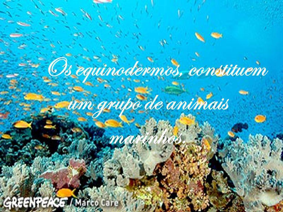 Esses animais têm uma vida muito livre, sem o homem matá-los.